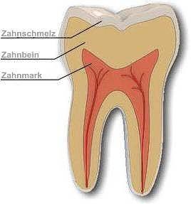Leistung Endodontie
